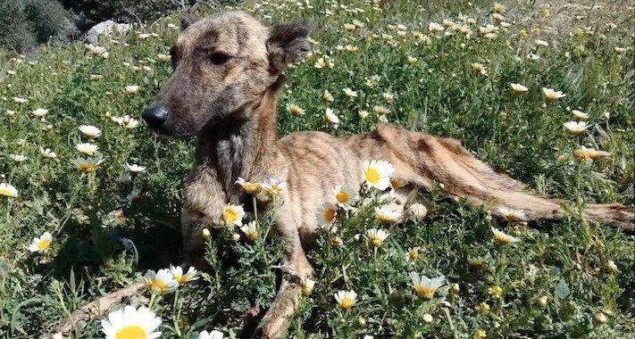 psí, příběhy, psa, pomoc, psům, na ulici, pouliční, psi, záchrany, psů, obrázky, video 3