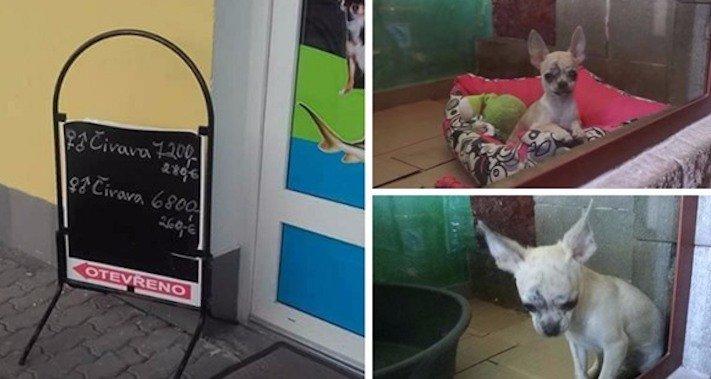prodej, psů, ve zveremixech, obchodech, v čr, v česku, v české republice, zákaza prodeje psů a koček ve zverimexech 2