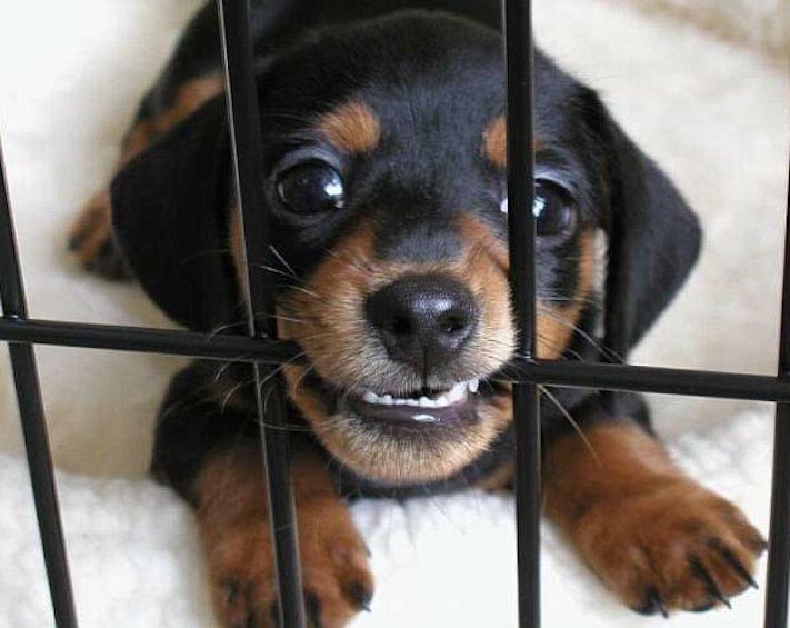 prodej, psů, ve zveremixech, obchodech, v čr, v česku, v české republice, zákaza prodeje psů a koček ve zverimexech 4