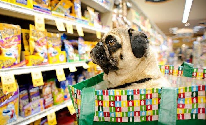 prodej, psů, ve zveremixech, obchodech, v čr, v česku, v české republice, zákaza prodeje psů a koček ve zverimexech 5