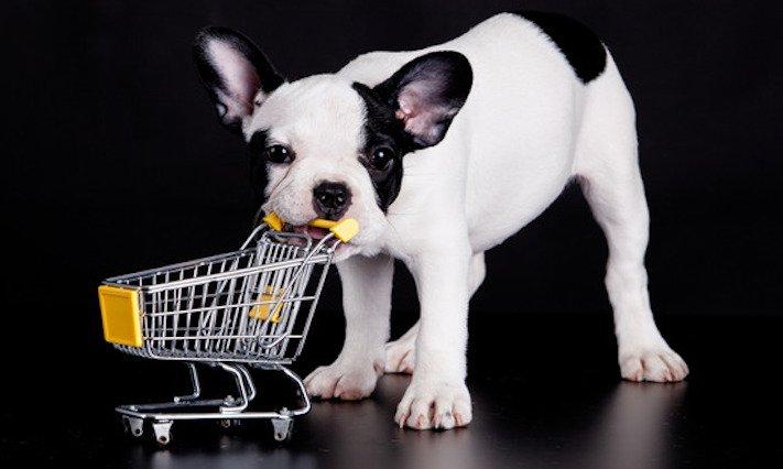 prodej, psů, ve zveremixech, obchodech, v čr, v česku, v české republice, zákaza prodeje psů a koček ve zverimexech 6