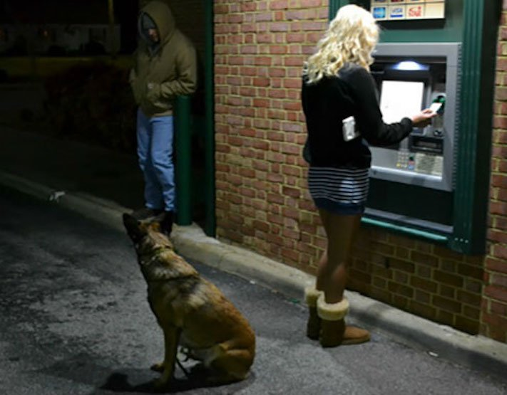 psí ochrana, u bankomatu, bankomat, výběr hotovosti, vtipné obrázky se psy 5