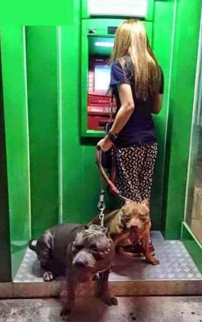 psí ochrana, u bankomatu, bankomat, výběr hotovosti, vtipné obrázky se psy 9