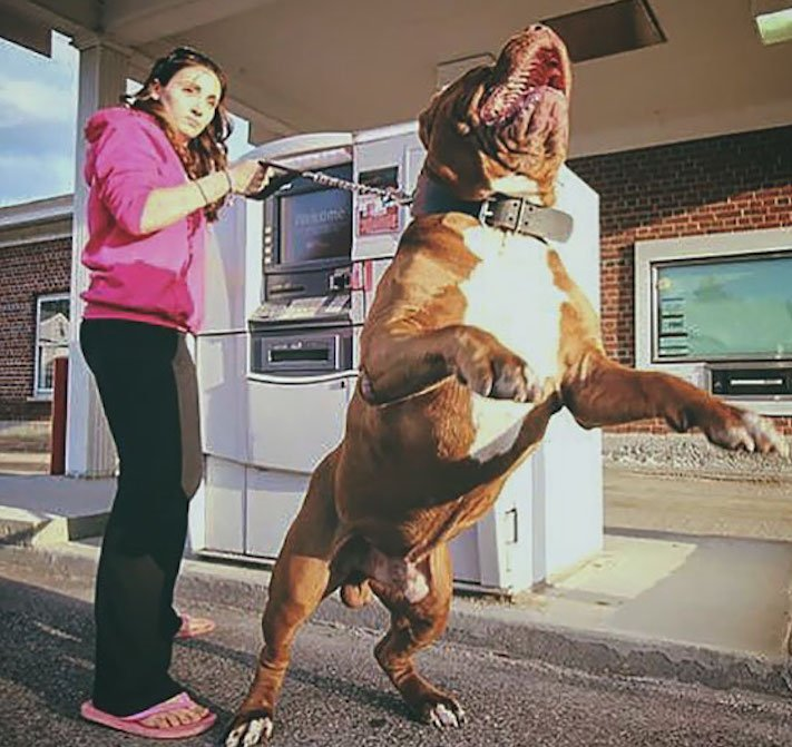 psí ochrana, u bankomatu, bankomat, výběr hotovosti, vtipné obrázky se psy 10