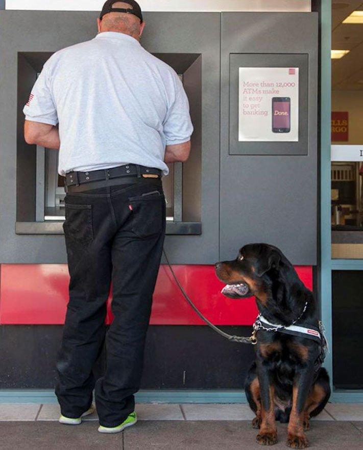 psí ochrana, u bankomatu, bankomat, výběr hotovosti, vtipné obrázky se psy 11