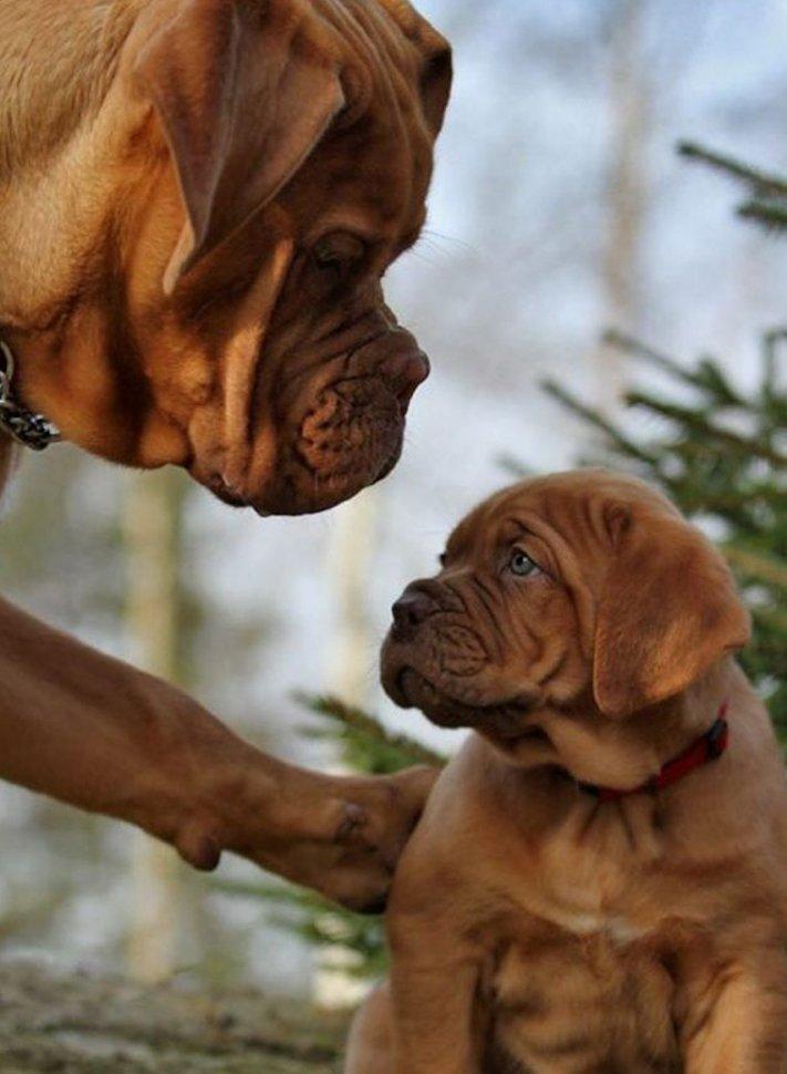 psi, fenky, fena, pes, se svými štěňaty, štěně, štěňata, obrázky štěňat, roztomilé obrázky psů 2