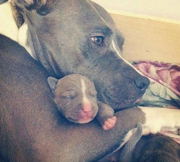 psi, fenky, fena, pes, se svými štěňaty, štěně, štěňata, obrázky štěňat, roztomilé obrázky psů 4