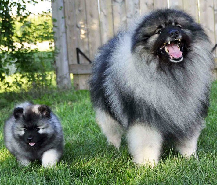 psi, fenky, fena, pes, se svými štěňaty, štěně, štěňata, obrázky štěňat, roztomilé obrázky psů 8