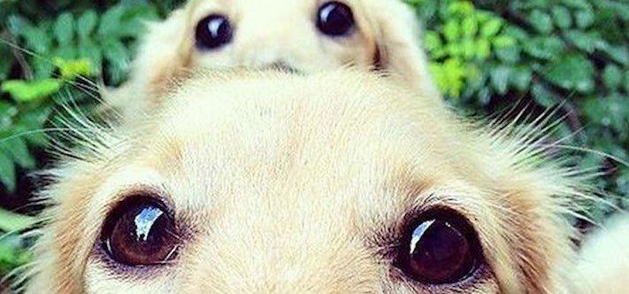 psi, fenky, fena, pes, se svými štěňaty, štěně, štěňata, obrázky štěňat, roztomilé obrázky psů 12