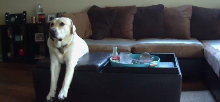 pes versus tv televize psi sledují televizi proč se pes kouká na televizi 1