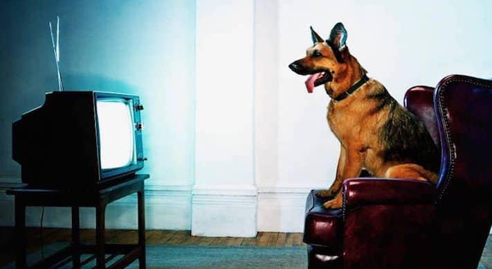 pes versus tv televize psi sledují televizi proč se pes kouká na televizi 4