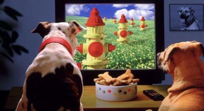 pes versus tv televize psi sledují televizi proč se pes kouká na televizi 5