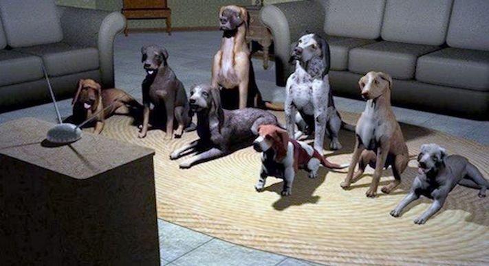 pes versus tv televize psi sledují televizi proč se pes kouká na televizi 6