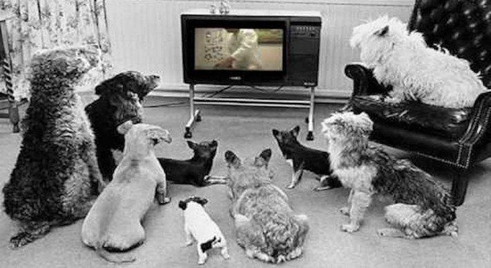 pes versus tv televize psi sledují televizi proč se pes kouká na televizi 7