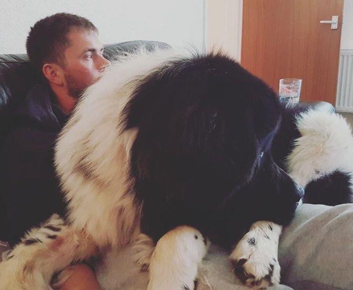 zábavné, vtipné, obrázky, fotky, velkých, big, obrovských, psů, psi, psí, fotoalbum 3
