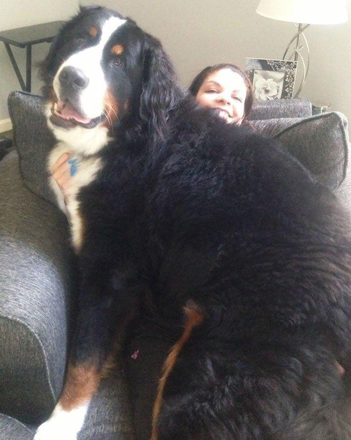 zábavné, vtipné, obrázky, fotky, velkých, big, obrovských, psů, psi, psí, fotoalbum 5