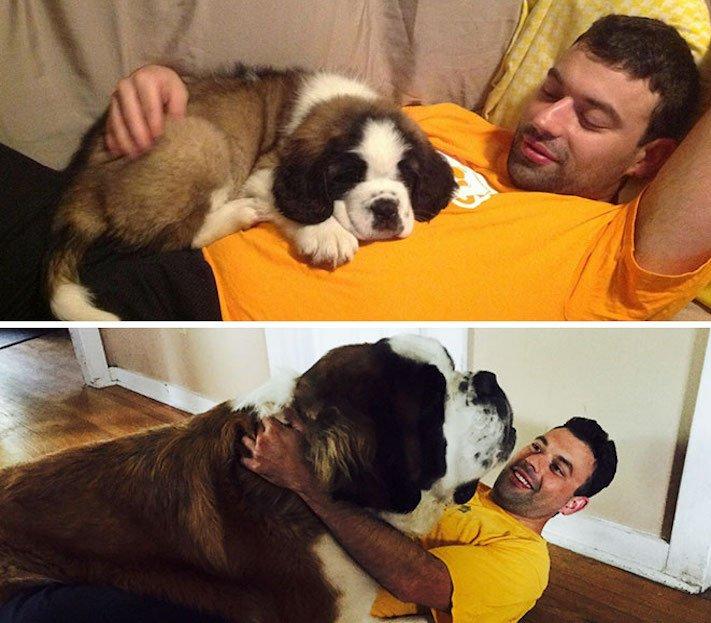 zábavné, vtipné, obrázky, fotky, velkých, big, obrovských, psů, psi, psí, fotoalbum 9