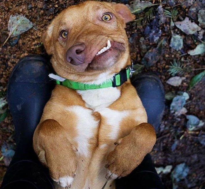 deformace čelisti, čelist, u psa, psu, psi, psy, adopce, psů, z útulku, pomoc psům, picasso, abnormalita, vzhled 1