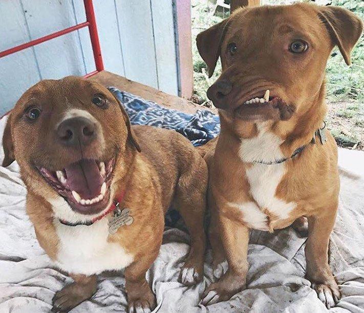 deformace čelisti, čelist, u psa, psu, psi, psy, adopce, psů, z útulku, pomoc psům, picasso, abnormalita, vzhled 2