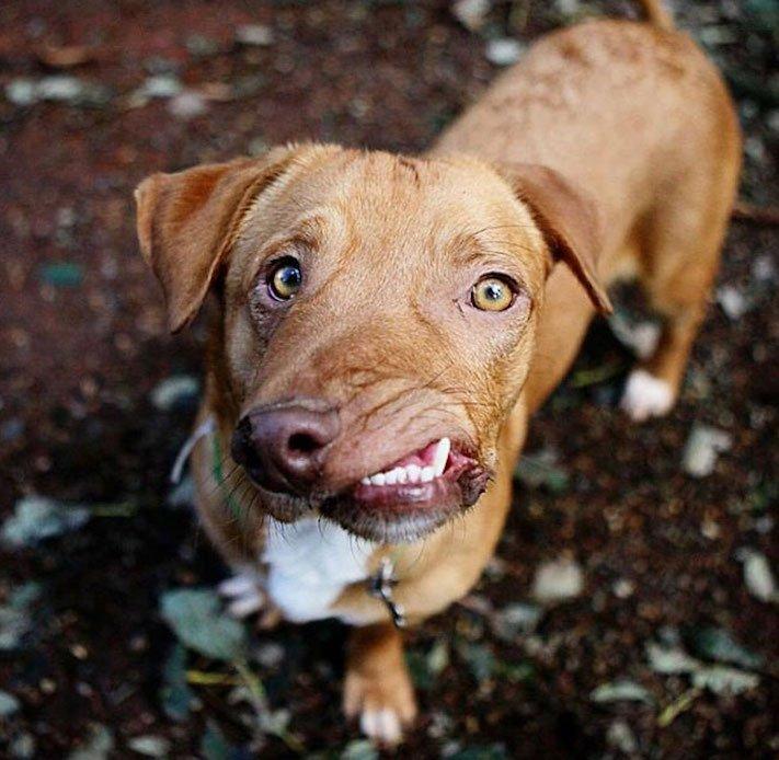 deformace čelisti, čelist, u psa, psu, psi, psy, adopce, psů, z útulku, pomoc psům, picasso, abnormalita, vzhled 3