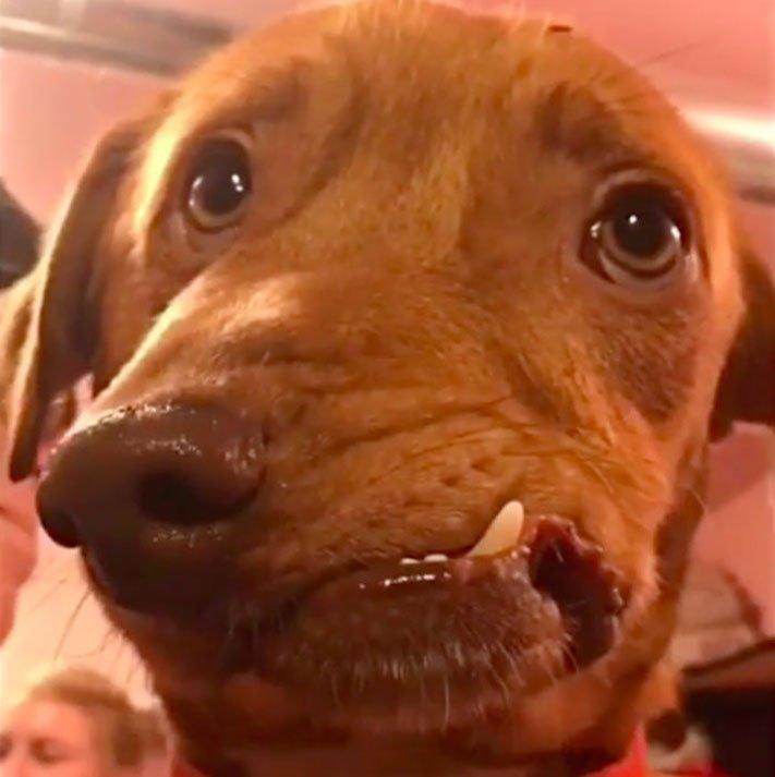 deformace čelisti, čelist, u psa, psu, psi, psy, adopce, psů, z útulku, pomoc psům, picasso, abnormalita, vzhled 5