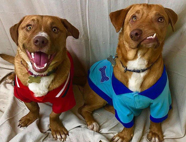 deformace čelisti, čelist, u psa, psu, psi, psy, adopce, psů, z útulku, pomoc psům, picasso, abnormalita, vzhled 9