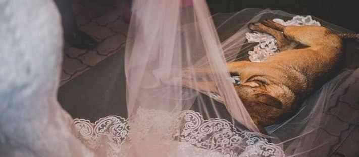 pouliční pes, z ulice, adopce, pomoc, při svatbě, svatba, svatební den, se psem, psi, psy, pes, na svatbě, svatební obřad, fotografie, obrázky, psí příběh 4