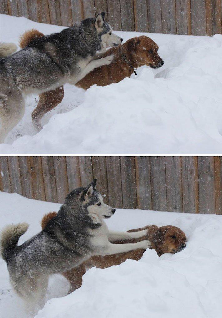 zlobivý pes, psi, rošťák, zábavné, vtipné, obrázky, se psy, fotoalbum, fotosérie, psí, zážitky, humor 1