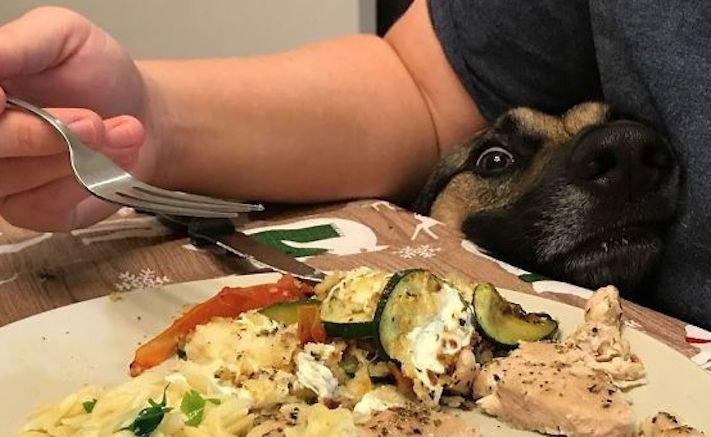 zlobivý pes, psi, rošťák, zábavné, vtipné, obrázky, se psy, fotoalbum, fotosérie, psí, zážitky, humor 3