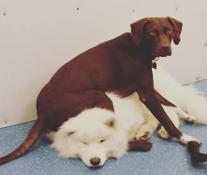 zlobivý pes, psi, rošťák, zábavné, vtipné, obrázky, se psy, fotoalbum, fotosérie, psí, zážitky, humor 10