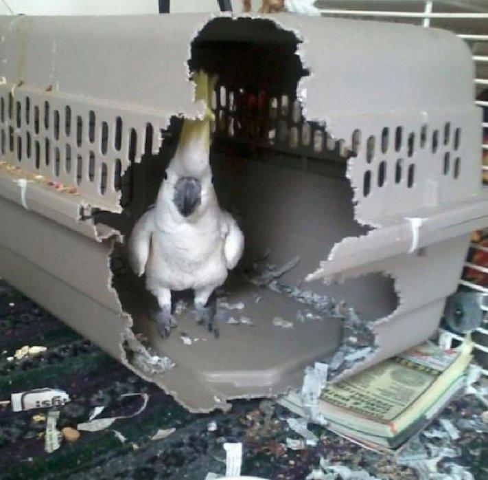 zlobivý pes, psi, rošťák, zábavné, vtipné, obrázky, se psy, fotoalbum, fotosérie, psí, zážitky, humor 11