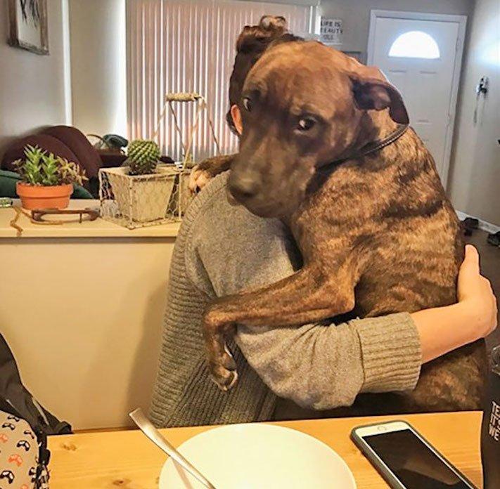 adopce psa z útulku, první dny, problémy, radost, vděčnost, psa, psí příběh, psí příběhy 3