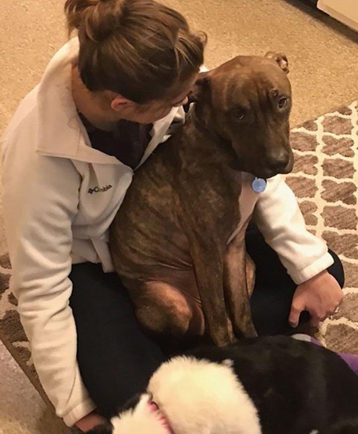 adopce psa z útulku, první dny, problémy, radost, vděčnost, psa, psí příběh, psí příběhy 4