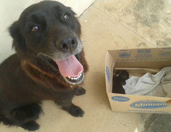 štěně v odpadcích, v koši, záchrana štěnětě, štěně, záchrana, psa, psů, psi, psy, pes, zachránil, zachraňuje, pomáhá, policie 5