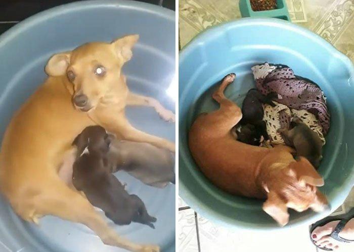 štěně v odpadcích, v koši, záchrana štěnětě, štěně, záchrana, psa, psů, psi, psy, pes, zachránil, zachraňuje, pomáhá, policie 6