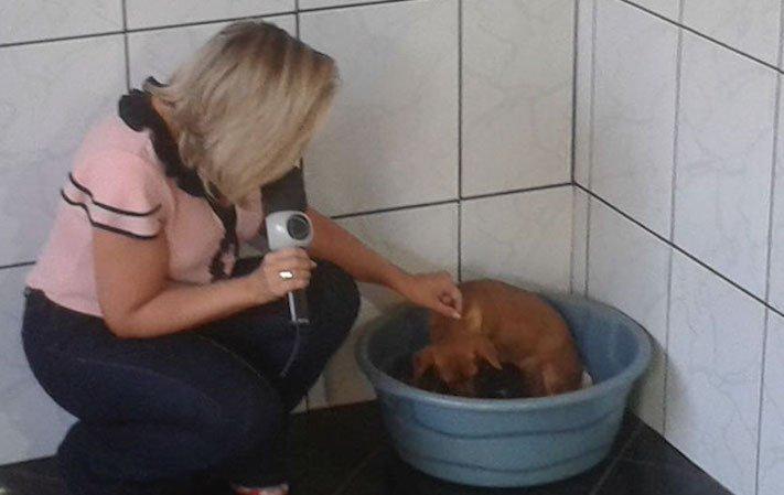 štěně v odpadcích, v koši, záchrana štěnětě, štěně, záchrana, psa, psů, psi, psy, pes, zachránil, zachraňuje, pomáhá, policie 8¨