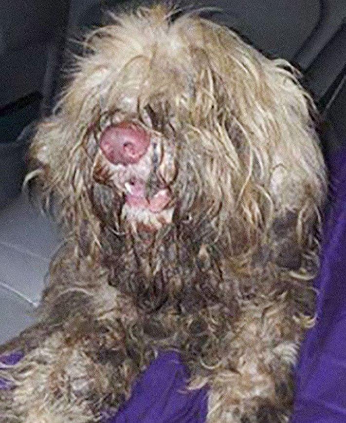 opuštěný pes, z ulice, na ulici, stříhání, psí salón, kadeřnictví, adopce psa, dobročinná práce, pro psy, dojemné psí příběhy 1