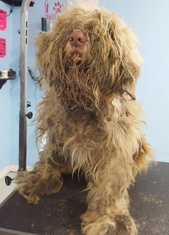 opuštěný pes, z ulice, na ulici, stříhání, psí salón, kadeřnictví, adopce psa, dobročinná práce, pro psy, dojemné psí příběhy 3