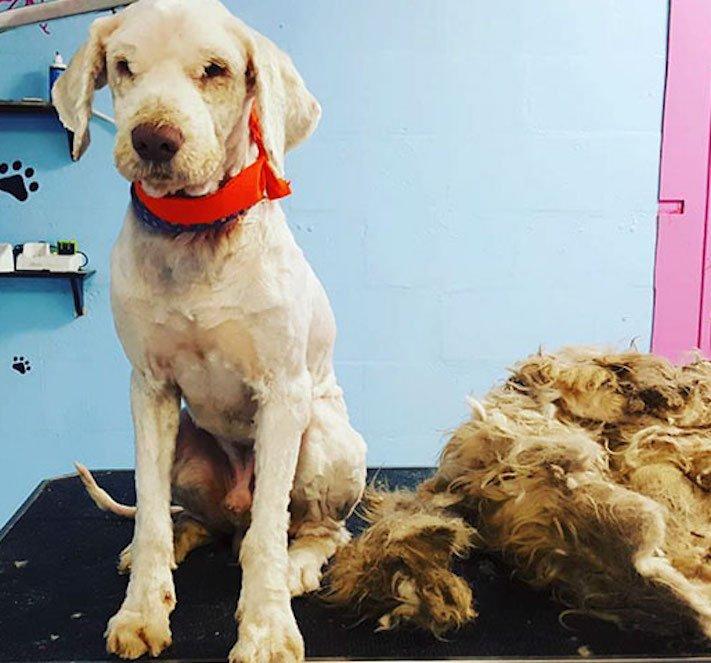 opuštěný pes, z ulice, na ulici, stříhání, psí salón, kadeřnictví, adopce psa, dobročinná práce, pro psy, dojemné psí příběhy 6