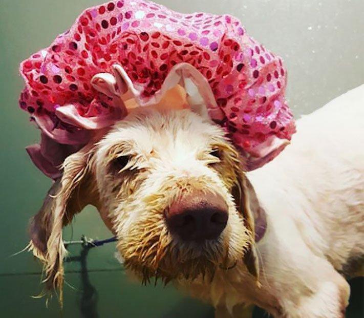 opuštěný pes, z ulice, na ulici, stříhání, psí salón, kadeřnictví, adopce psa, dobročinná práce, pro psy, dojemné psí příběhy 7