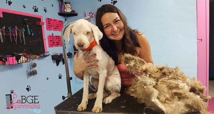 opuštěný pes, z ulice, na ulici, stříhání, psí salón, kadeřnictví, adopce psa, dobročinná práce, pro psy, dojemné psí příběhy 9