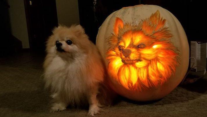 vyřezávání do dýně, vyřezávání psa, do dýně, jak vyřezávat do dýně, halloween, cz, česká republika, umění, vyřezávání, o psech 1