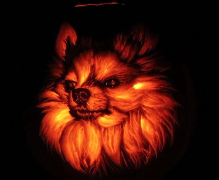 vyřezávání do dýně, vyřezávání psa, do dýně, jak vyřezávat do dýně, halloween, cz, česká republika, umění, vyřezávání, o psech 4