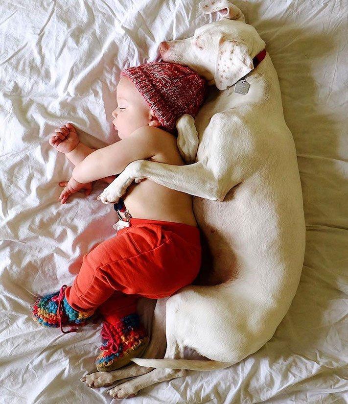 fotoalbum, děti a psi, pes a dítě, dítě se psem, novorozenec, pes, fotky, obrázky, příběhy, diskuze 1