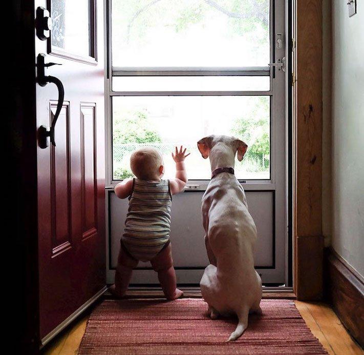 fotoalbum, děti a psi, pes a dítě, dítě se psem, novorozenec, pes, fotky, obrázky, příběhy, diskuze 4