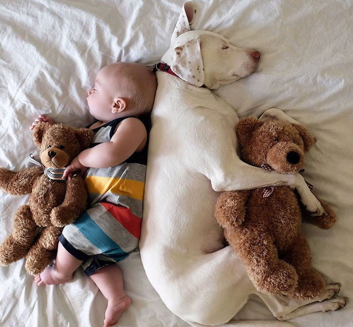 fotoalbum, děti a psi, pes a dítě, dítě se psem, novorozenec, pes, fotky, obrázky, příběhy, diskuze 5