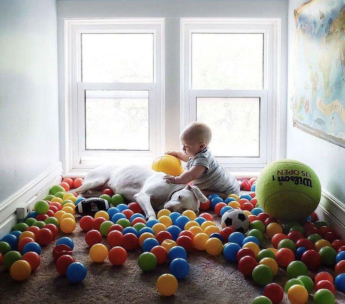 fotoalbum, děti a psi, pes a dítě, dítě se psem, novorozenec, pes, fotky, obrázky, příběhy, diskuze 6