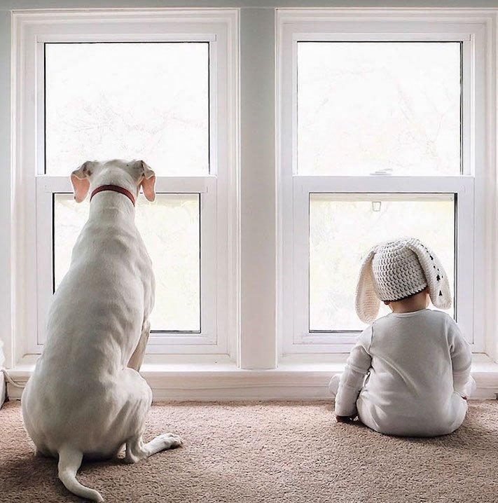 fotoalbum, děti a psi, pes a dítě, dítě se psem, novorozenec, pes, fotky, obrázky, příběhy, diskuze 7a