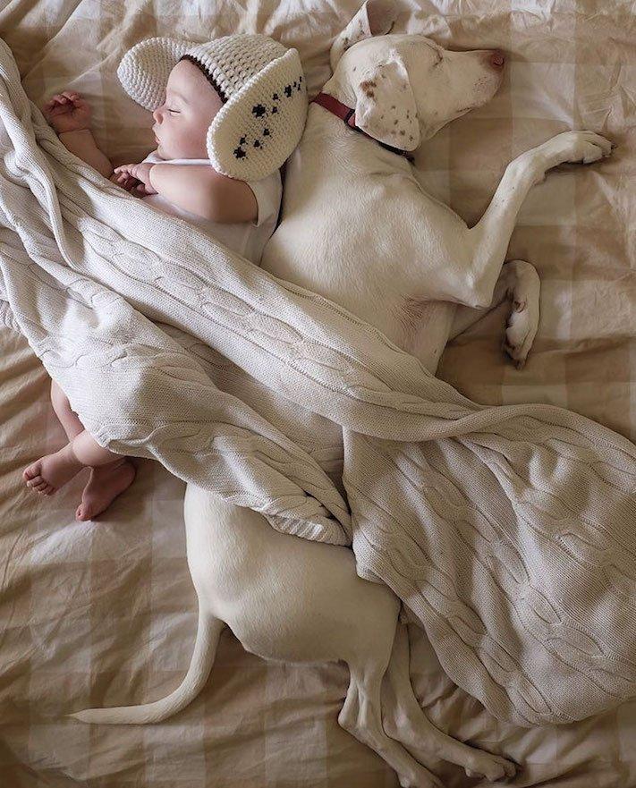 fotoalbum, děti a psi, pes a dítě, dítě se psem, novorozenec, pes, fotky, obrázky, příběhy, diskuze 7b