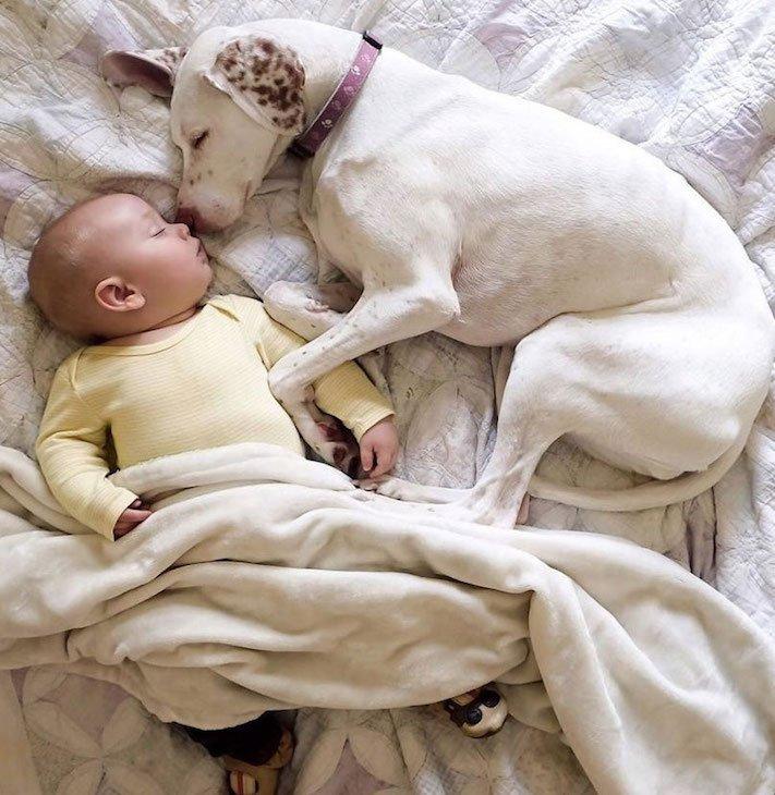 fotoalbum, děti a psi, pes a dítě, dítě se psem, novorozenec, pes, fotky, obrázky, příběhy, diskuze 8
